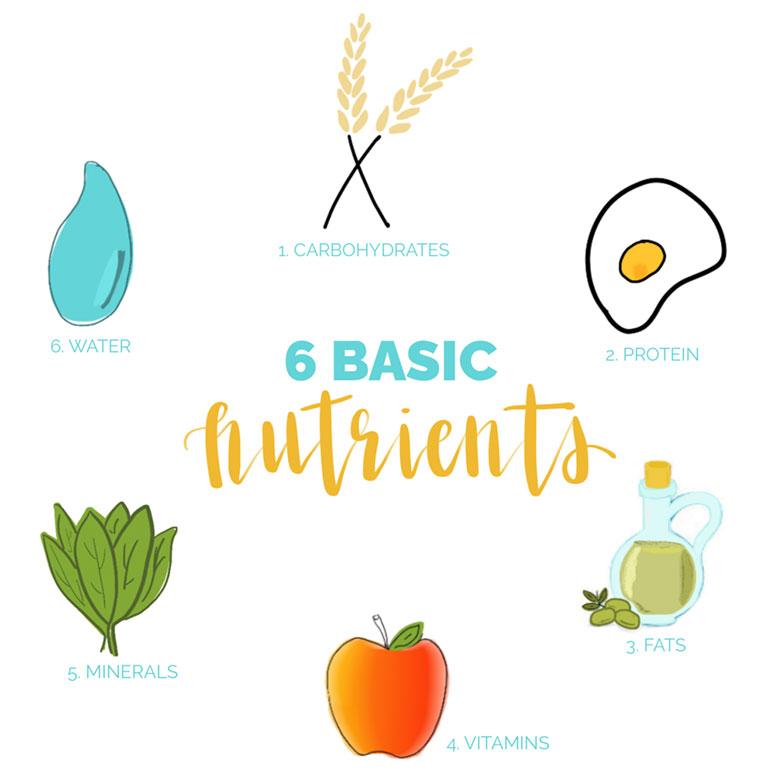 6 chất dinh dưỡng cơ bản