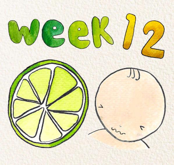 Mang thai tuần thứ 12 của thai kỳ
