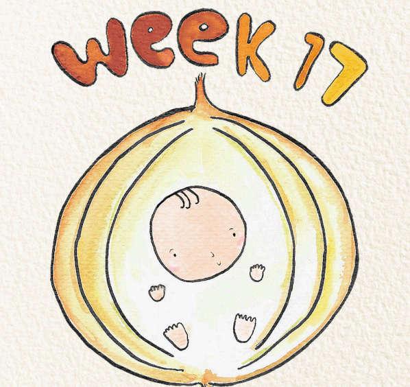 Tuần thứ 17 của thai kỳ