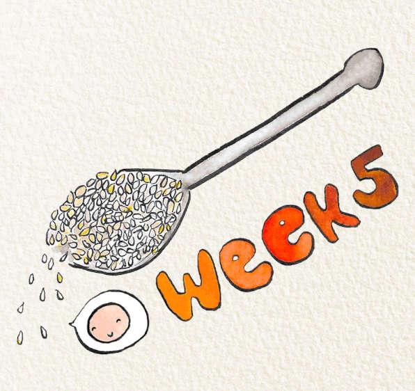 Tuần thứ 5 của thai kỳ